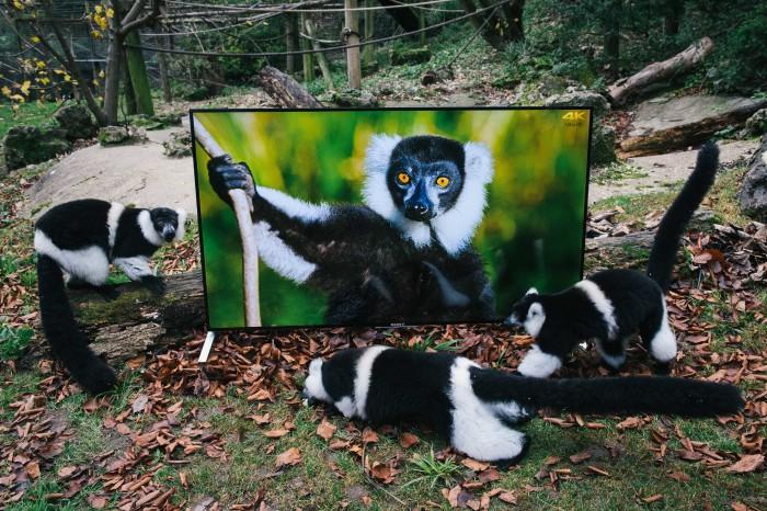 lemuri2