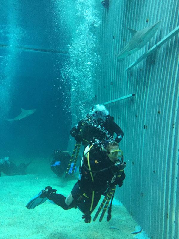 apertura paratia e integrazione nuovi squali AcquariodiGenova (4)